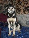 KSIĘŻNICZKA piękna i mądra suczka szuka domu i rodziny poszukuję Psy / Szczeniaki