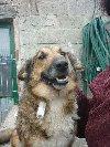 NORKA przyjazna i ciekawska sunia czeka na swojego człowieka poszukuję Psy / Szczeniaki