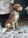 DUFFY  uroczy, wesoły, młody psiak czeka na drugą szansę  poszukuję Psy / Szczeniaki