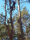 Ścinka drzew i modelowanie zieleni. poszukuję Remontowe / Budowlane